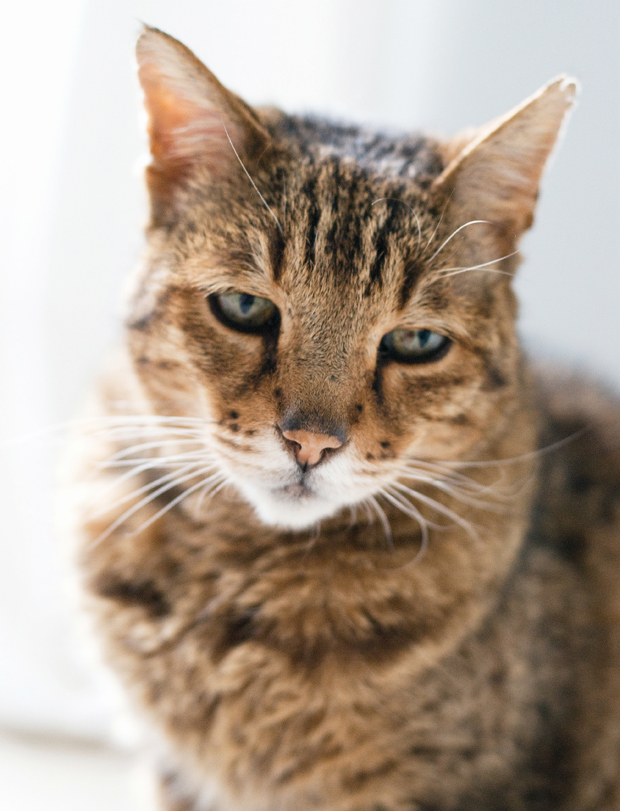 Profile   Bristol & Wales Cat Rescue   These Four Walls blog