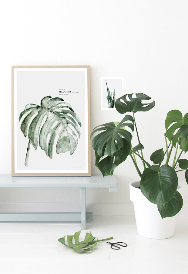 'Botanics' art prints (& discount!) from Ross & Brown | These Four Walls