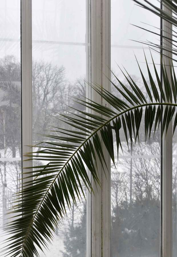 The palm house - top tips for a design-led city break in Gothenburg | These Four Walls blog