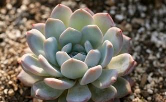 small succulent plant