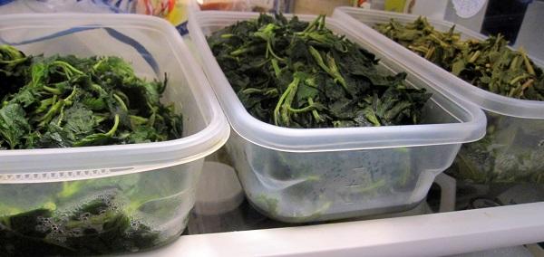 Stinging Nettle cooling in the fridge