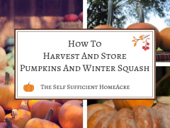 How to Harvest and Store Pumpkins and Winter Squash