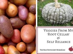 Veggies From My Root Cellar & Self Reliance
