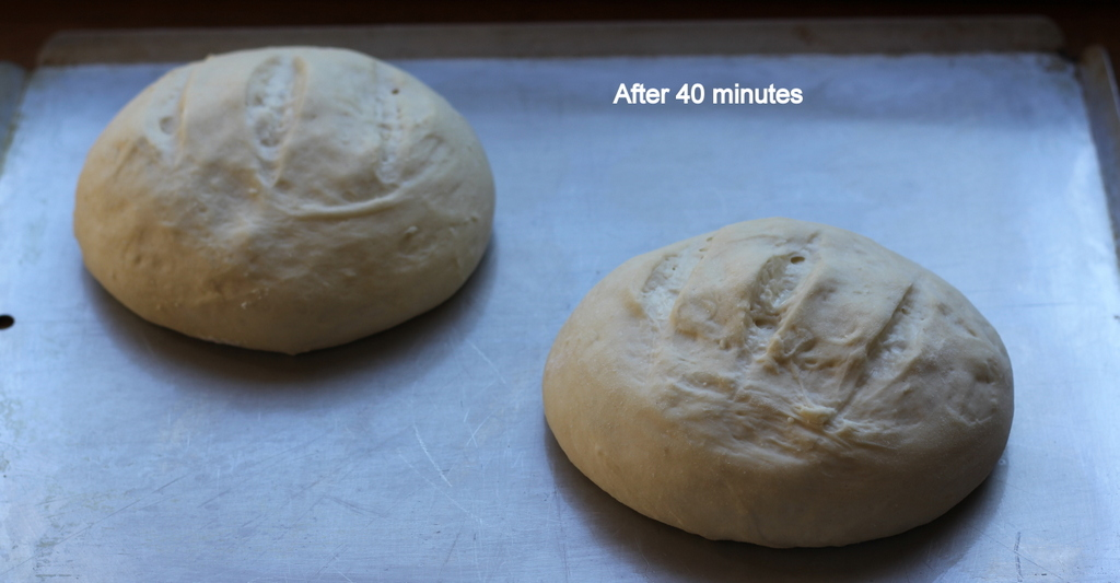 Easy 4 Ingredient Artisan Bread
