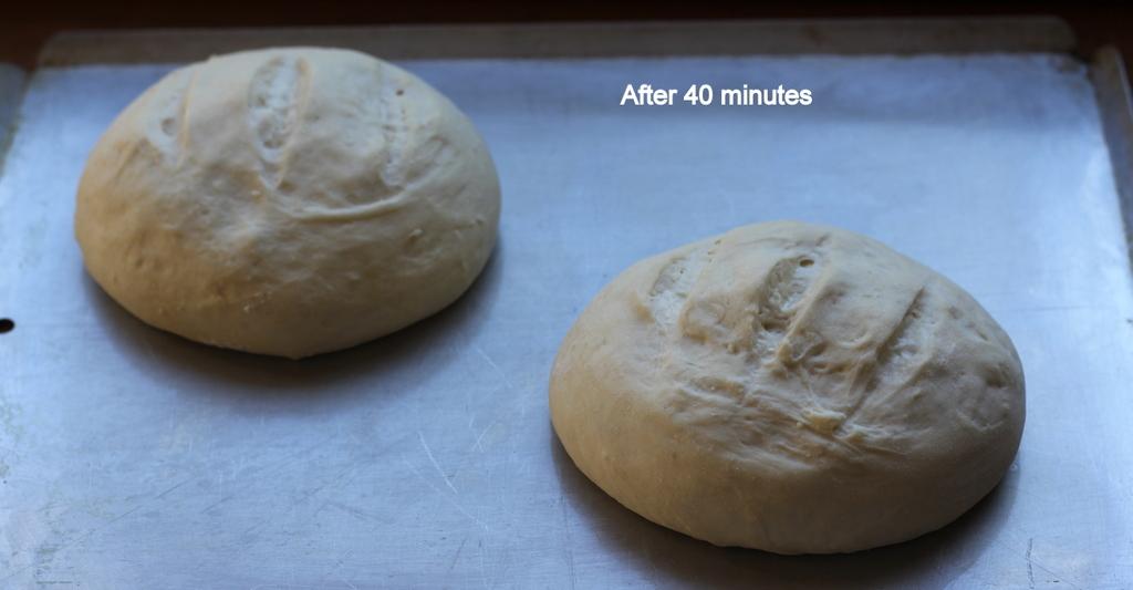 Easy 4 Ingredient Artisan Bread