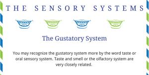 Sensory System Printable Handout Guides