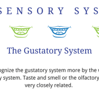 Sensory System Printable Handout Guides
