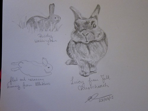Pencil sketches of bunnies