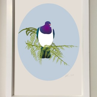 Illustration of a kereru or New Zealand woodpigeon displayed in a white frame.