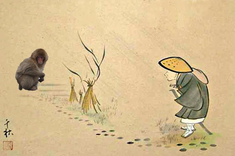 Basho Monkey