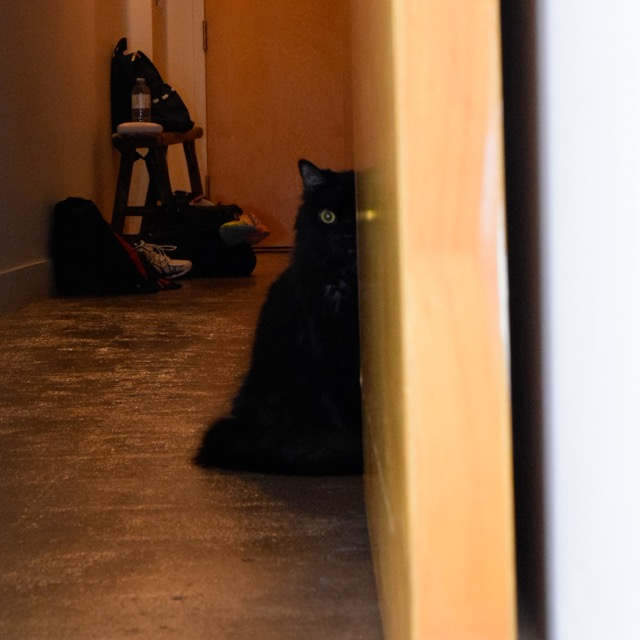 shorty hallway cat