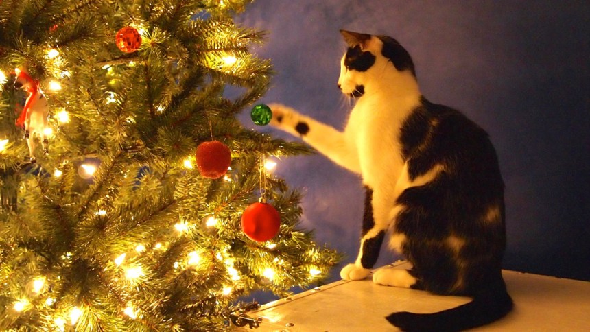 safety tip for cats christmas