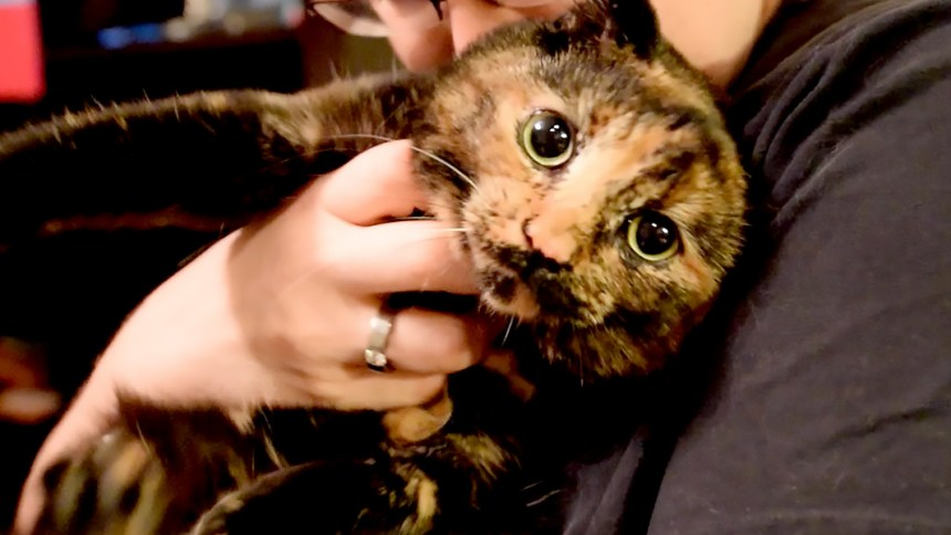 are all torties female