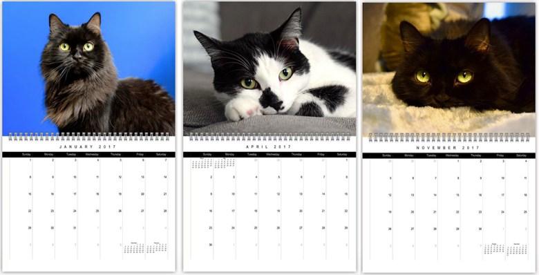 shoko 2017 cat calendar shots