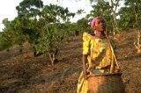 MDG – women rural farmer