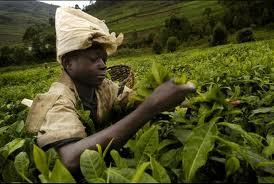 rwanda economy