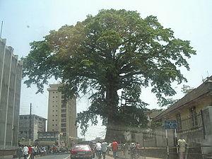 Cotton Tree – Freetown
