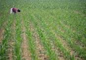 Sierra Leone farming3