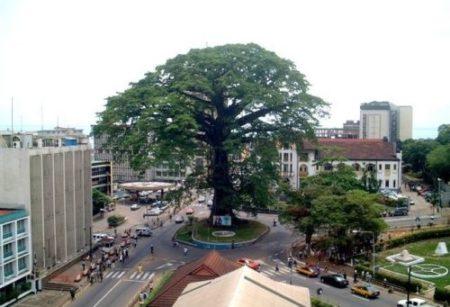 Freetown Cotton Tree