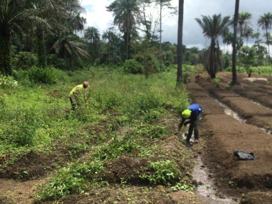 munda farming 4