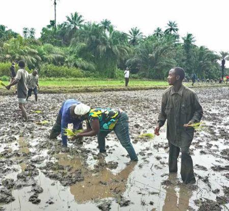 Farming in Sierra Leone – Sierra Leone faces serious food shortages – June 2021
