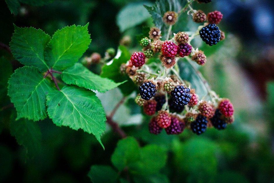 The Simple Green - Blackberry Basil Galette