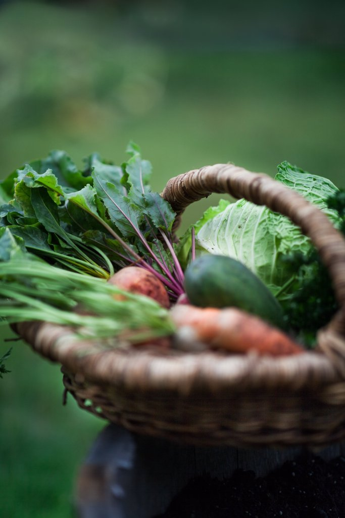 Basket of Fall Harvest Vegetables