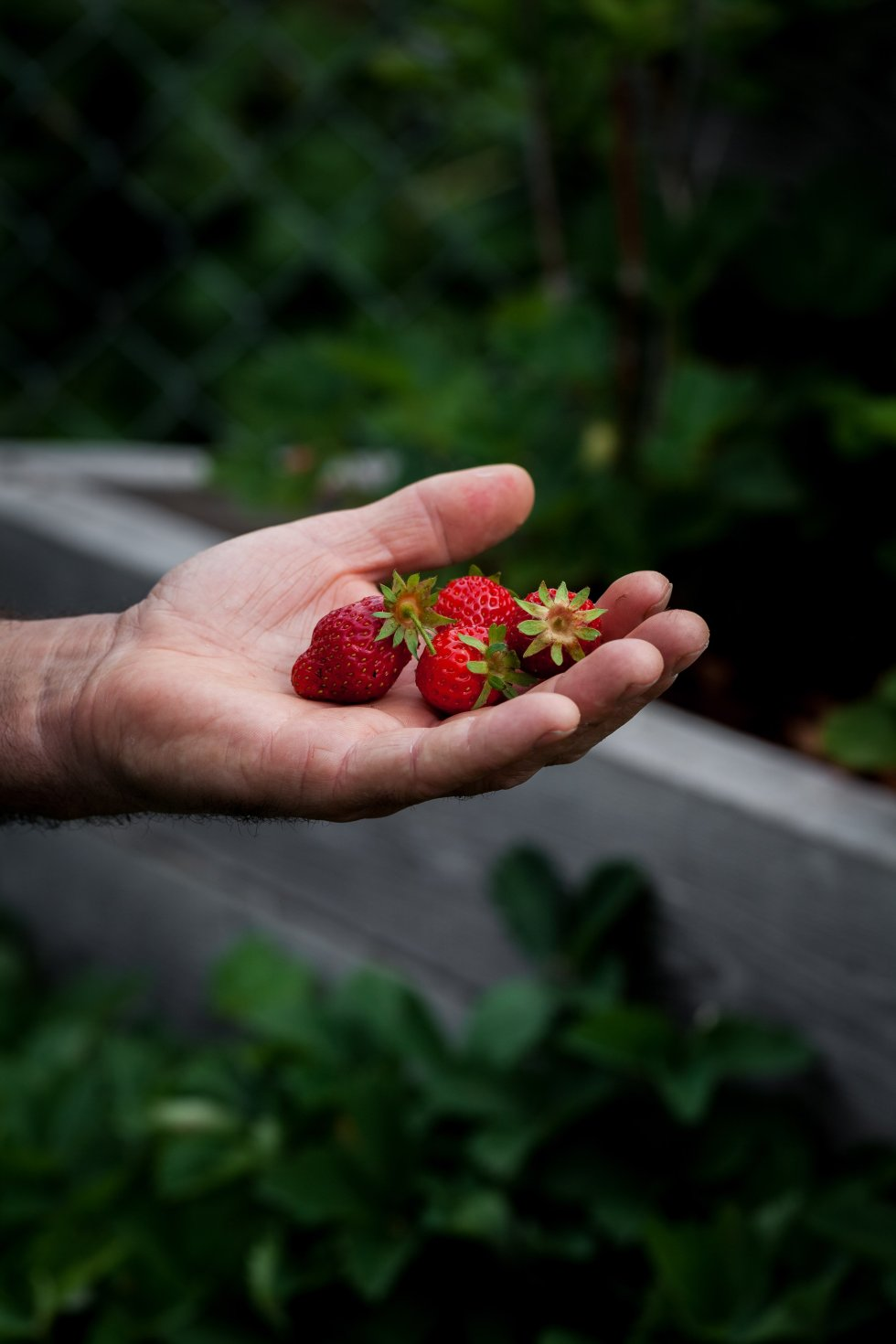 Strawberries in hand - The Simple Green