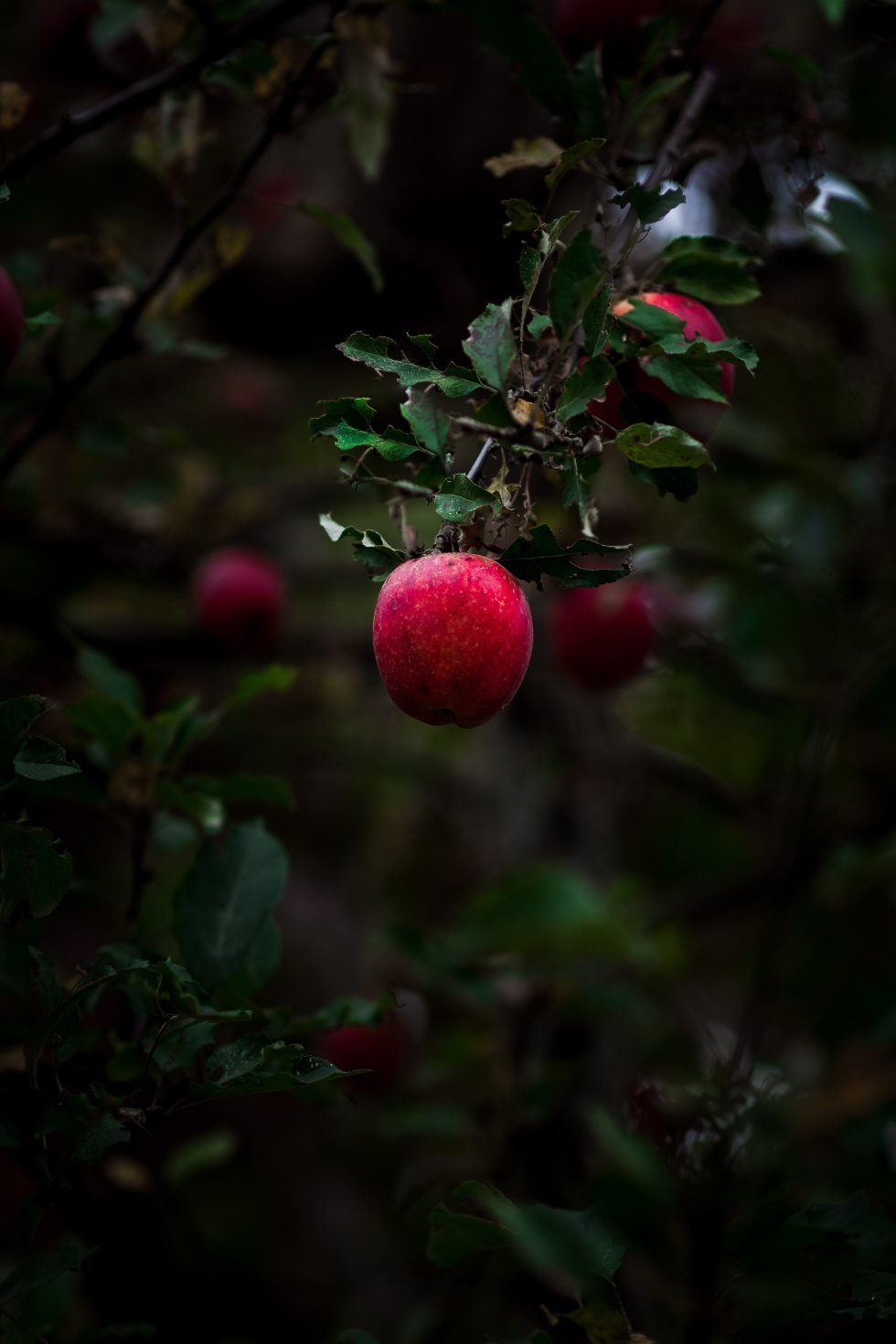 Vegan Salted Caramel Apples