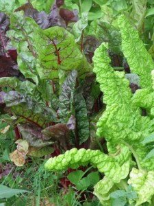 garden.7.11.09 013
