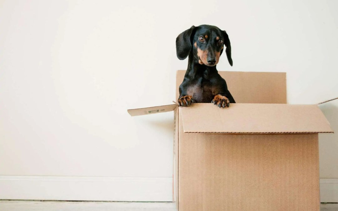 Moving 101: How To Ensure A Smooth Relocation With Your Pets