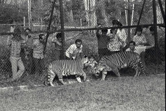 b2ap3_thumbnail_B-Singapore-Zoo.jpg