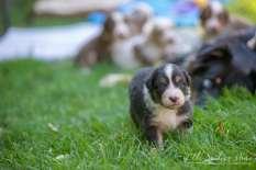 Nora&Oliver_Puppies-156Reglisse