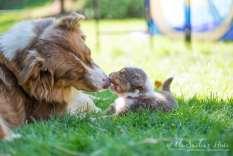 Nora&Oliver_Puppies-176Raiko
