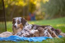Nora&Oliver_Puppies-179