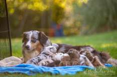 Nora&Oliver_Puppies-179
