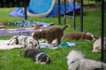 Nora&Oliver_Puppies-188RollingSammy
