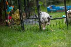 Nora&Oliver_Puppies-230Rio