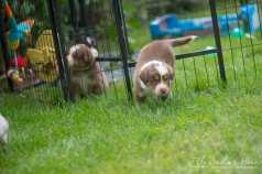 Nora&Oliver_Puppies-232Raiko