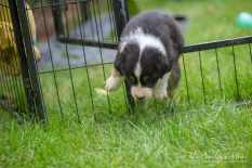Nora&Oliver_Puppies-234Reglisse
