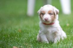 Nora&Oliver_Puppies-251RedSwiffer