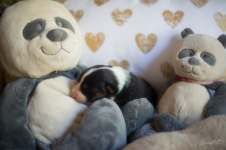 Nora&Oliver_Puppies_NT-F-3