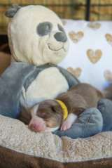 Nora&Oliver_Puppies_RT2-F-6