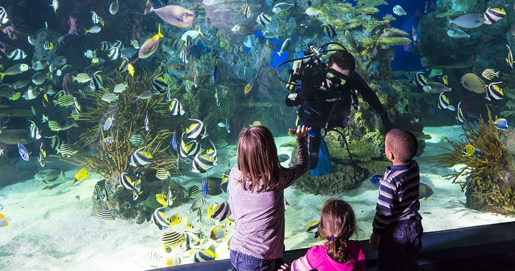 A diver at Ripley's Aquarium of the Smokies interacts with kids