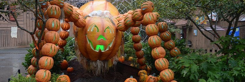 Dollywood Spider Made With Pumpkins