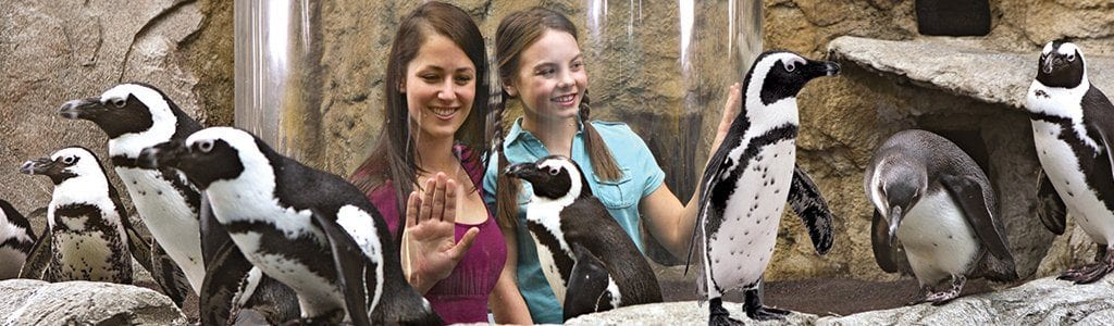 The penguin playhouse at Ripley's Aquarium of the Smokies (photo courtesy of Ripley's)