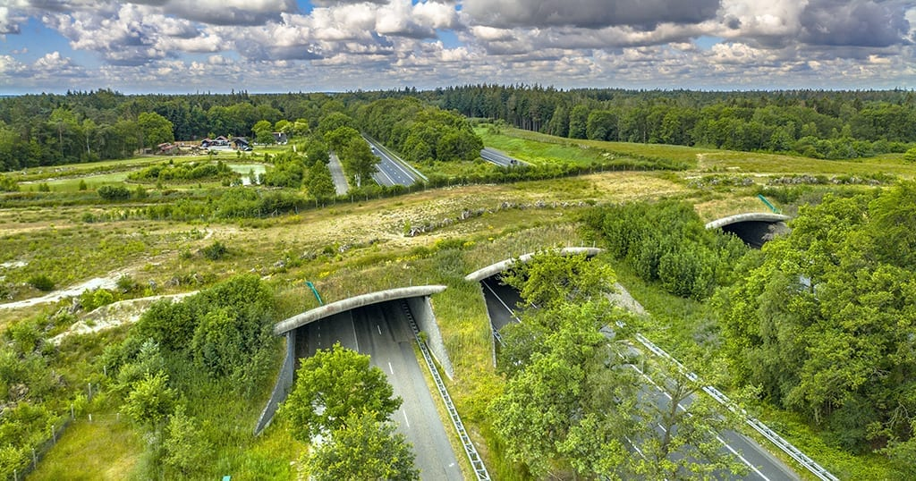 Wildlife crossings are popping up all over the world, like this one in Switzerland, and have proven to be effective in reducing animal-related vehicle crashes (stock photo)