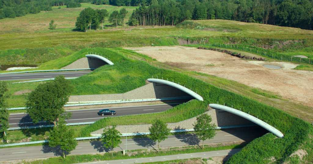 Another example of a multi-lane wildlife overpass (stock photo)