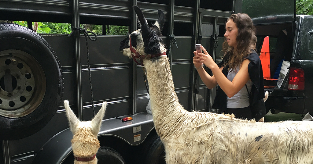 Llama rentals in the Smoky Mountains