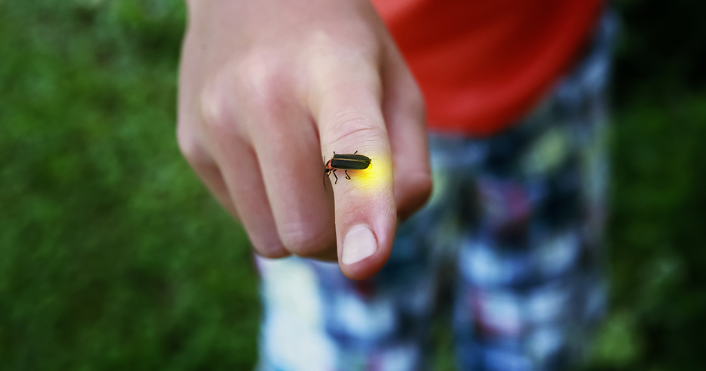 A firefly sits on a child's finger